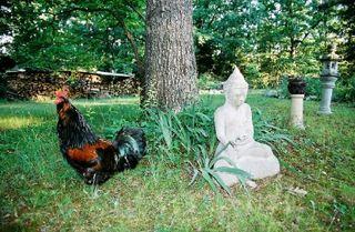 Koko-da: image copyright Barbara Harmony